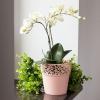 Květináč s krajkou bílý 12,0 cm
